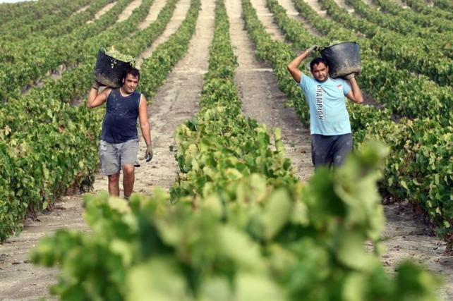 Španija, Jerez de la Frontera vinogradi