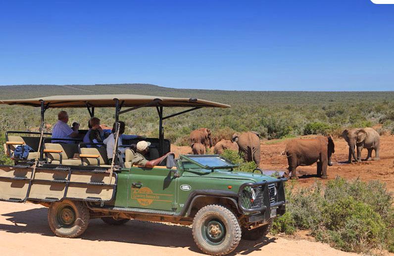Potovanje Južna Afrika, Garden Route, slonji narodni park Addo