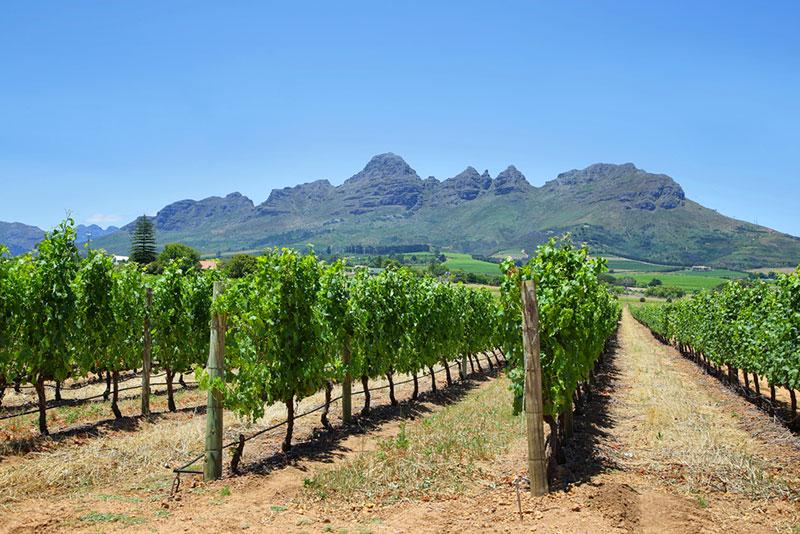 Potovanje Južna Afrika, Garden Route, Franschhoek