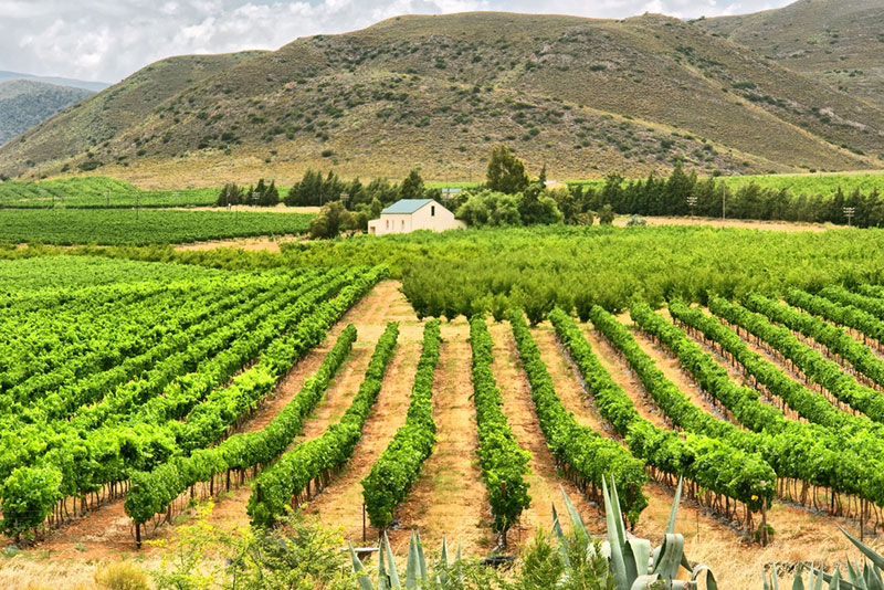 Potovanje Južna Afrika, Garden Route, Little Karoo