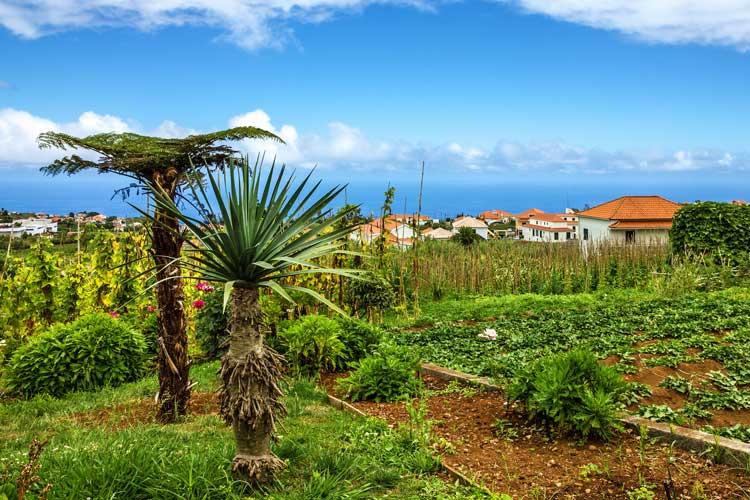Madeira potovanje, Santana