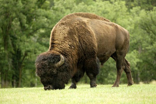 ZDA potovanje, Custer Park