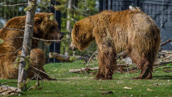 ZDA potovanje, Grizzly and Wolf Center