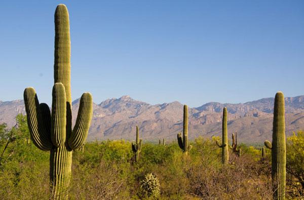 ZDA potovanje, Divji zahod za družine, Saguaro