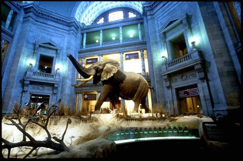 ZDA potovanje, Vzhodna obala in Kanada, Washington, odlični muzeji