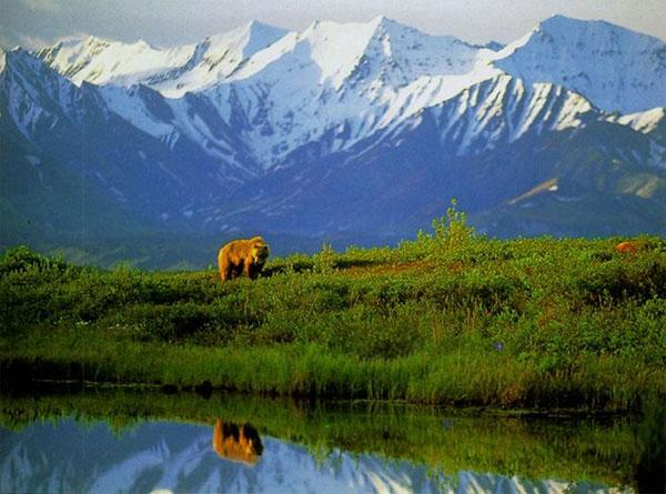 Potovanje ZDA, Aljaska, Narodni park Denali