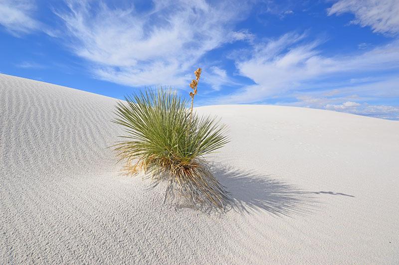 ZDA potovanje narodni park White Sands