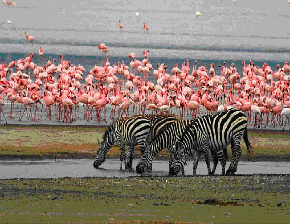 flamingi in zebre