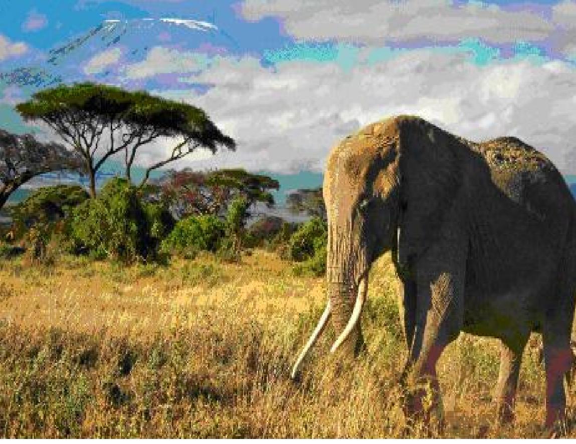 afriški slon